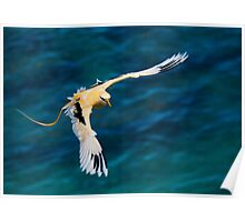 Golden Bosun In Flight_2 Poster