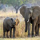 Elephants by JenniferEllen