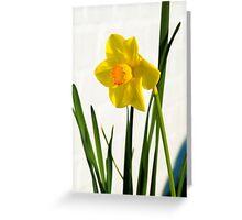 Daffodil HQ Greeting Card