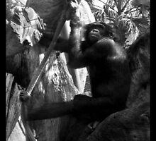 Bonobo by korinna999