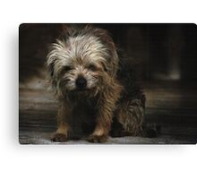 Chilli Dog Canvas Print