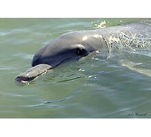 Dolphin watching Photographic Print