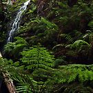 down in the forest by peter  jackson