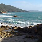 view from Boat Harbour towards Rocky Cape by gaylene