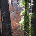Landscapes and Nature Paintings by Heidi Schwandt Garner by Heidi Schwandt Garner