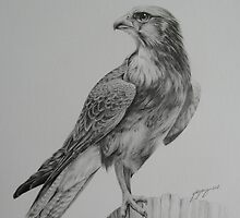 Brown Falcon by yinyung