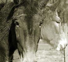 Mulling Mules by Sheri Bawtinheimer