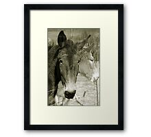 Mulling Mules Framed Print