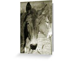 Mulling Mules Greeting Card