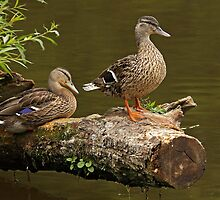 Guardians of The Log! by Mark Hughes