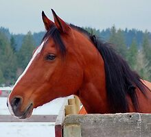 Bay Horse Mare by AnnDixon