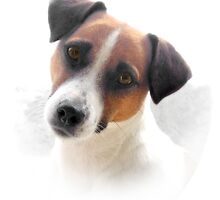 Jack Russell by Penny Alexander