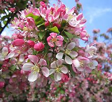 Tree blossom against the sky by Eleanor11