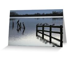 Evening roost Greeting Card