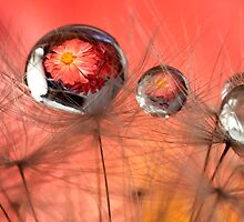 Red Bubble by Jenni77