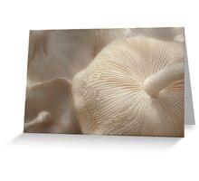 Of Parasols and Party Dresses Greeting Card