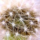 Soft - Close up of Dandelion Seeds by Carly Chapman