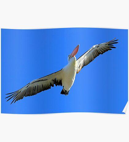 Pelican Airways Poster