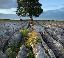 Malham Morning Blush by SteveMG