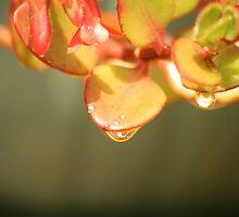 Water droplet on leaves by Kelly Walker