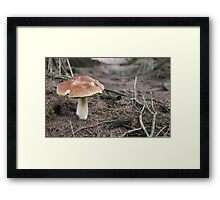 Undergrowth of the English Countryside Framed Print