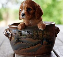 Potted Puppy (4) by Tanya Rossi