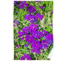 Park Güell Flowers Poster