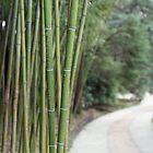 Bamboo  by Yulia Manko