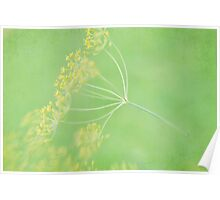 Dill In Texture Poster
