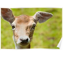 Bambi with floppy ears Poster