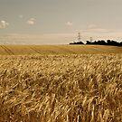 Fields Of Gold by Lou Wilson