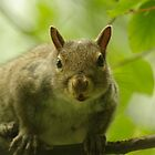 Grey Squirrel by Gillian Marshall