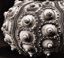 Sea Urchin Detail in Mono by Darren Wilkin