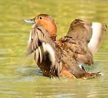 time to splash out (female mallard duck) by Steve