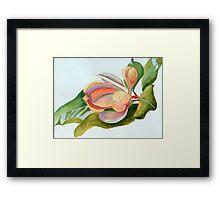 Magnolia 11 Framed Print