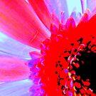 Pop-Art  Gerbera by Livvy Young