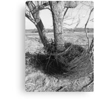 black and white barb wire Canvas Print