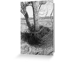 black and white barb wire Greeting Card