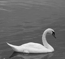 Swan Lake by KAGPhotography