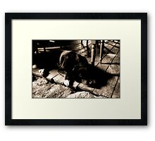Staying warm by the fire Framed Print