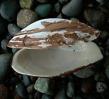 Empty Shell by AnnDixon