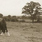 Old horse - rural Shropshire by Chris  Hitchiner