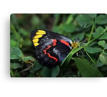 Butterfly (3) Canvas Print