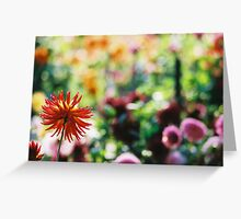 Dahlia, Conservatory of Flowers. Golden Gate Park. Greeting Card