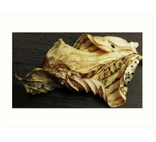Dead Hosta Leaf Art Print