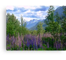 Lupins and Mountains Canvas Print
