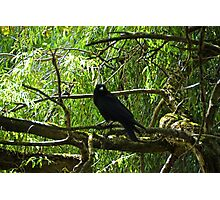 Watched by a Crow....Sidford Devon UK Photographic Print