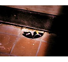 Grecian Shoemaker Butterfly Photographic Print
