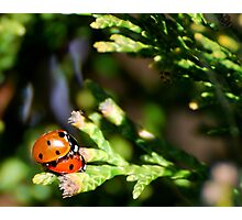 Love Bugs Photographic Print
