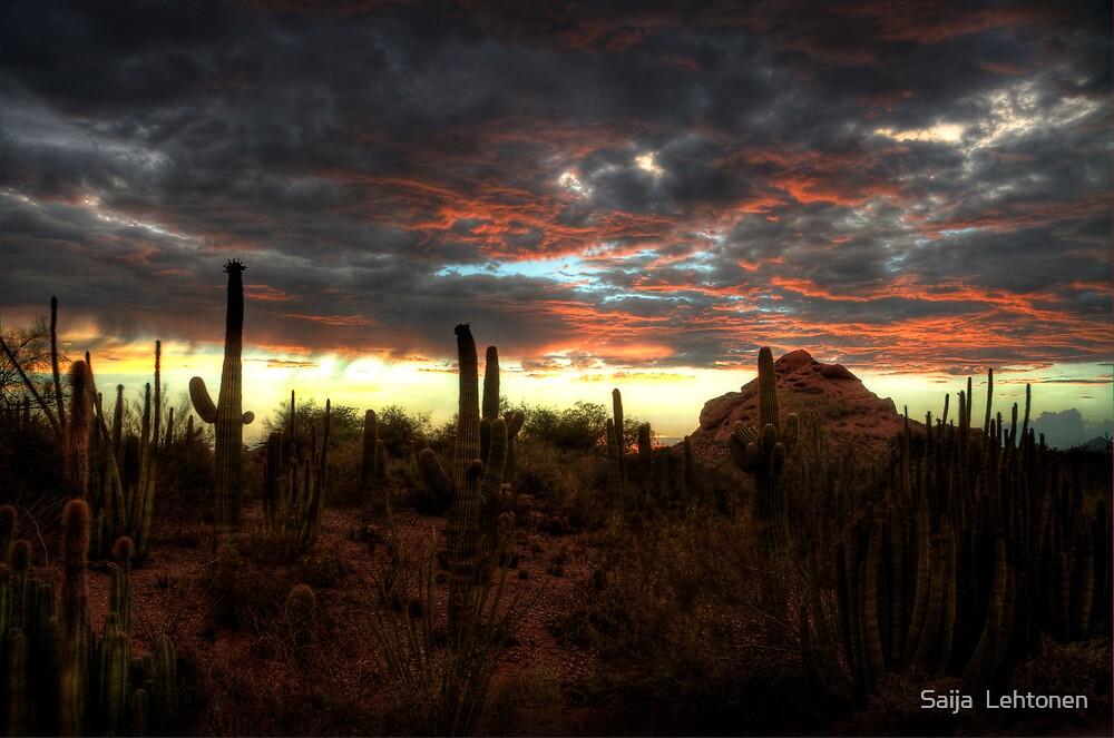 Desert Sunset  by Saija  Lehtonen